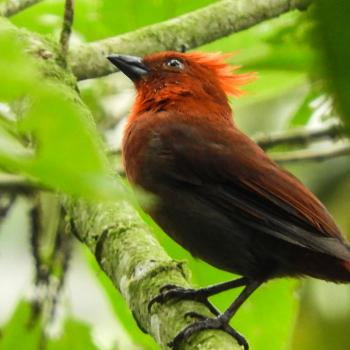 Each year a new bird species is discovered in Colombia.