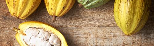Cacao, un producto con potencial en el mercado canadiense