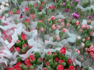 Colombia estará presente con sus flores
