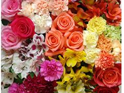 Flowers exporter Canada