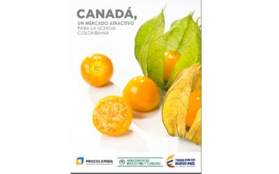 Conozca las tendencias y oportunidades para la uchuva colombiana en el mercado c