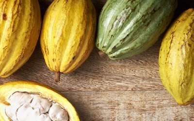 Lo que debe saber para exportar cacao fino de aroma
