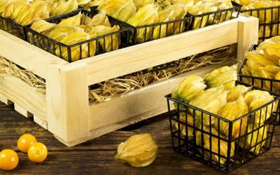 Exportadores de productos frescos a Estados Unidos deben renovar registro ante l